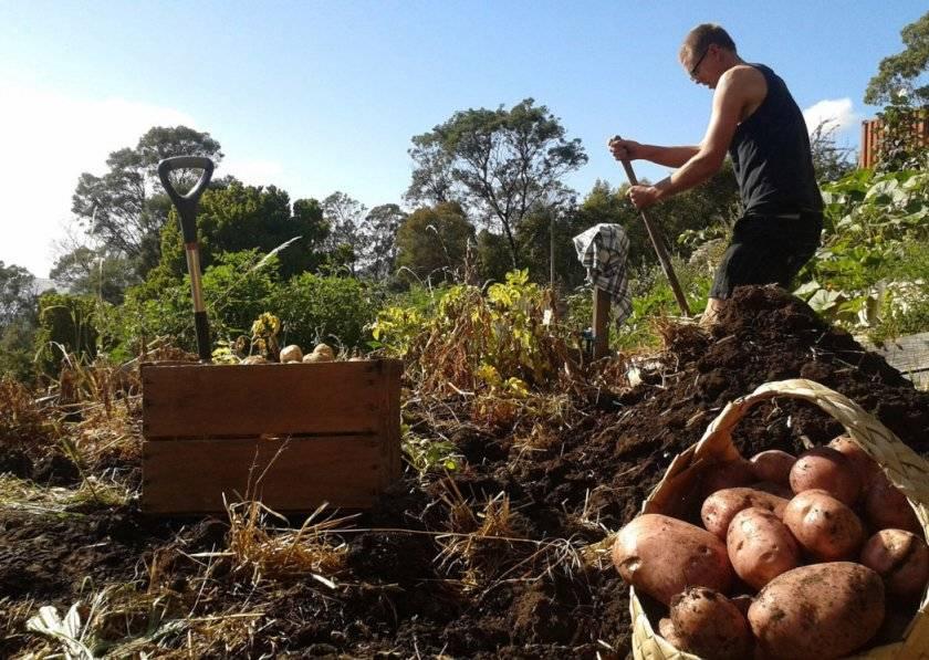 Как вырастить лук в дождливую погоду: чем подкормить и когда убирать урожай