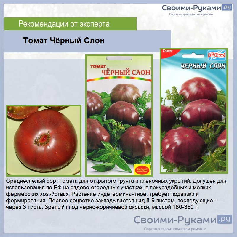 Сортовые характеристики и особенности сорта томатов «розовый слон»