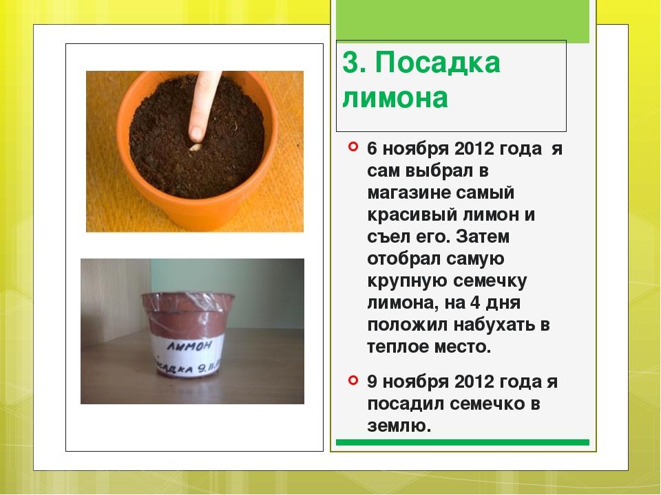 Земля для комнатных цветов: какая почва лучше и как ее обеззаразить? какие цветы предпочитают кислый грунт? универсальный и субстрат