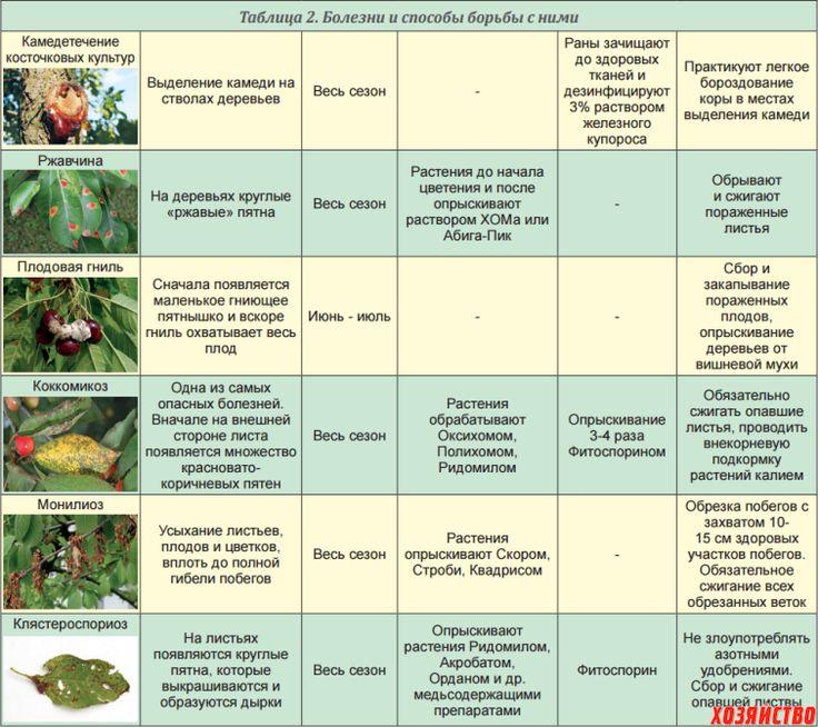 Обработка яблонь весной от болезней и вредителей: когда и чем опрыскивать сад