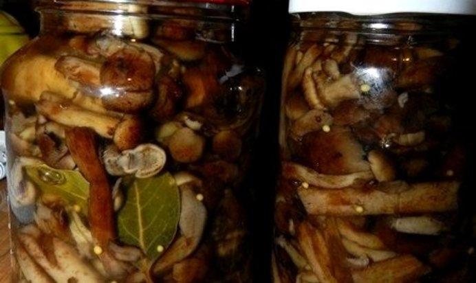 Опята маринованные на зиму: рецепты приготовления простые для домашних условий