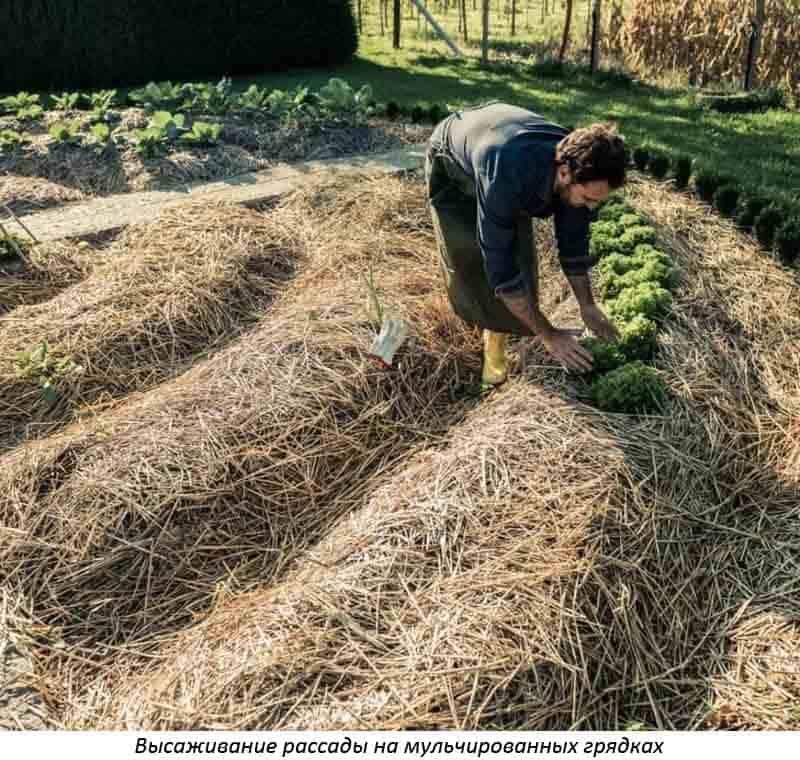 Солома как удобрение для огорода, как правильно использовать?