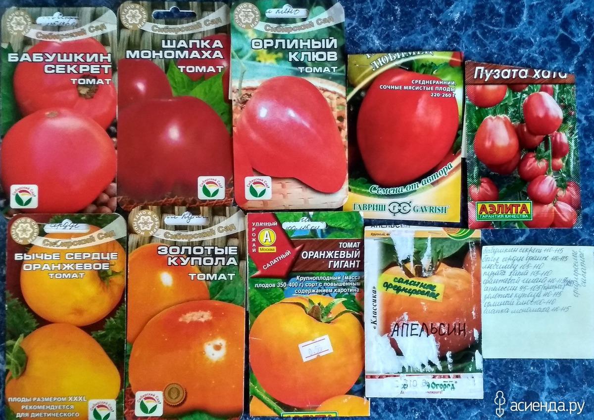 Томат орлиный клюв: описание сорта, характеристика помидор, выращивание, фото и видео