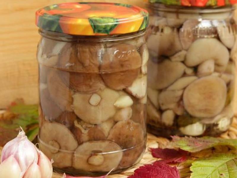Маринованные маслята - как приготовить в домашних условиях в банках на зиму по пошаговым рецептам с фото