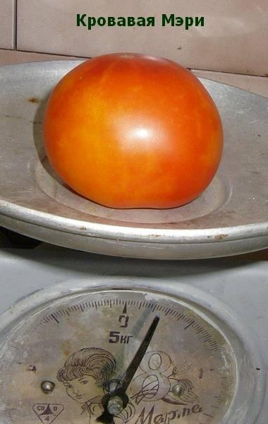 Томат мэри робинсон: характеристика и описание сорта, отзывы об урожайности помидоров, фото семян
