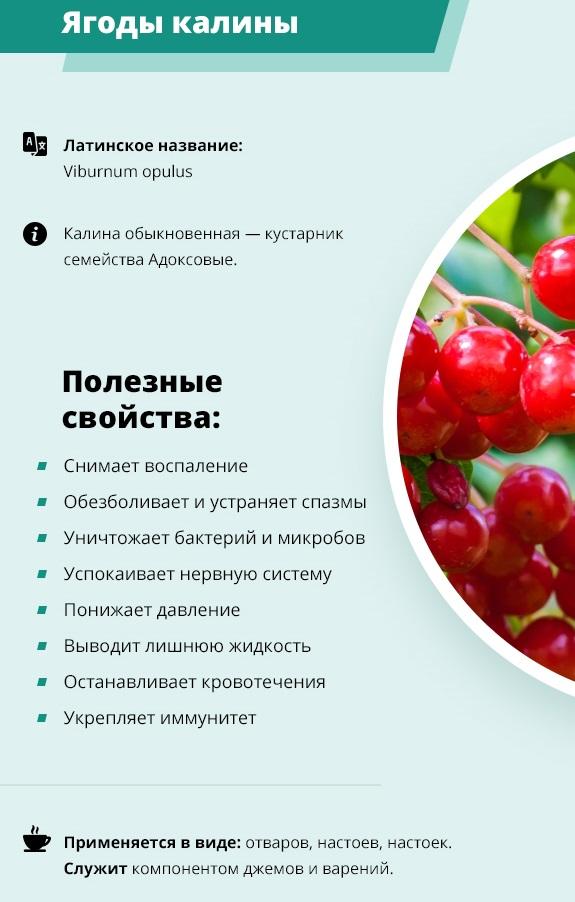 7 полезных свойств калины для здоровья, а также противопоказания и рецепты на её основе