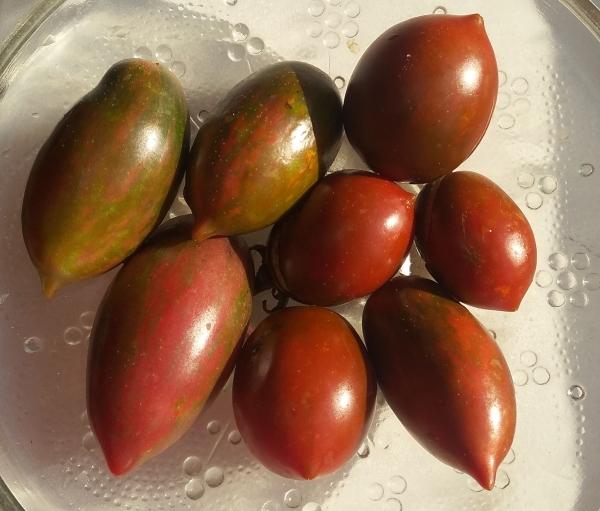 Яркое и вкусное украшение вашего дачного участка — томат «монисто розовое»