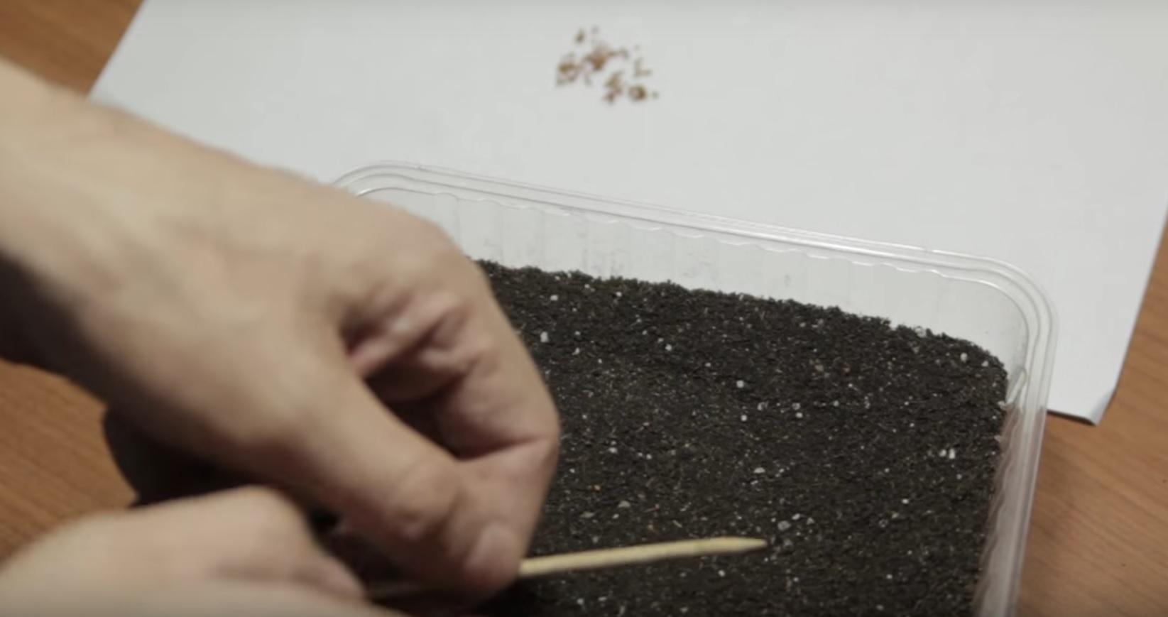 Выращивание клубники из семян в дома на рассаду