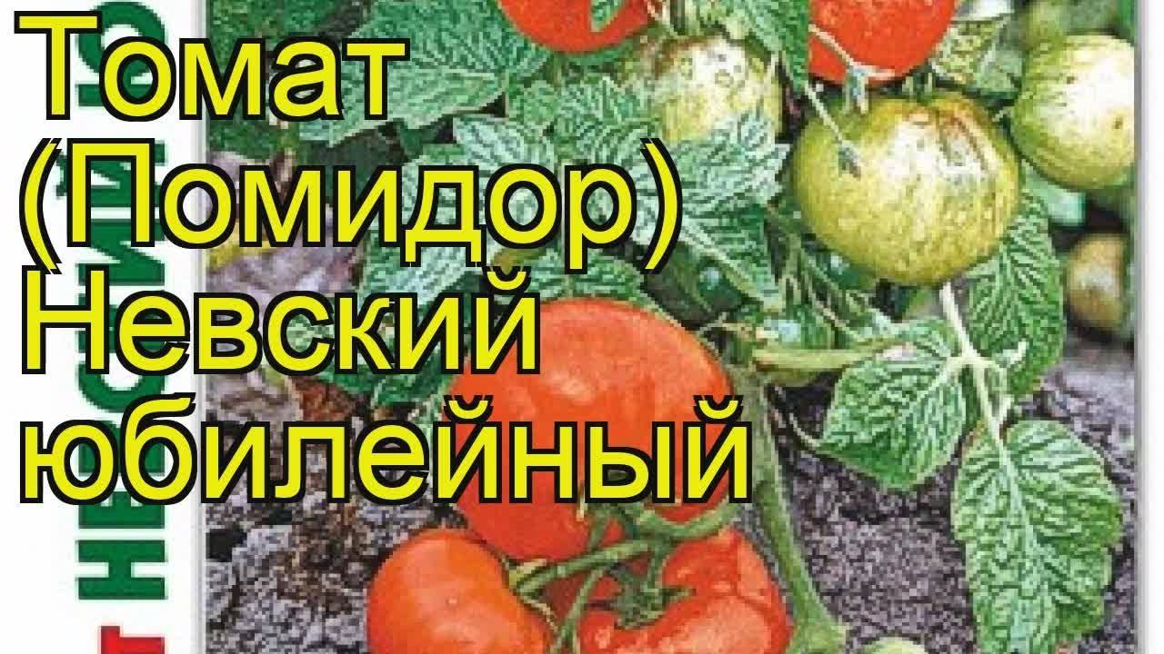 Томат невский характеристика и описание сорта