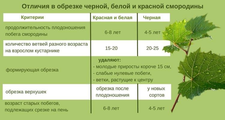 Через сколько начинает плодоносить виноград после посадки - дневник садовода semena-zdes.ru
