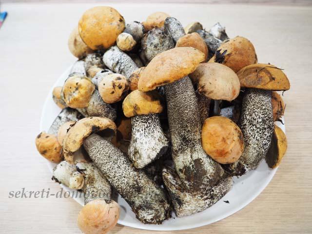 Заготовка грибов на зиму – 15 очень вкусных рецептов: сушенные, маринованные в банках, соленные и другие вариации на любой вкус