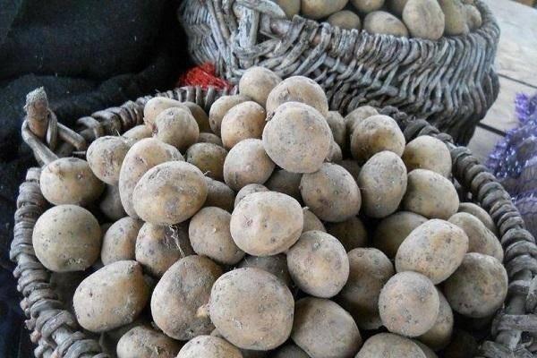 Новейший картофель «гренада»: описание сорта, фото и правила выращивания