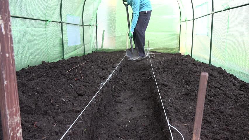 Чем обработать теплицу весной: обработка внутри от болезней и вредителей – аграрий