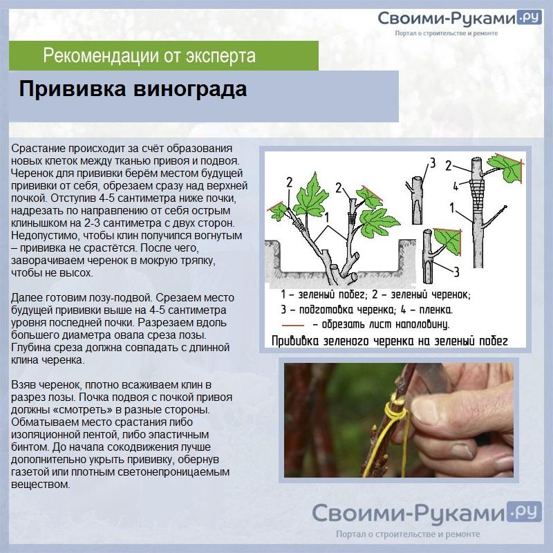 Уход за крыжовником: правила полива, подкормки и обрезки