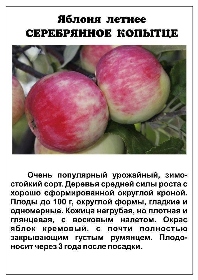 Сорт яблони имант, описание, характеристика и отзывы, а также особенности выращивания данного сорта