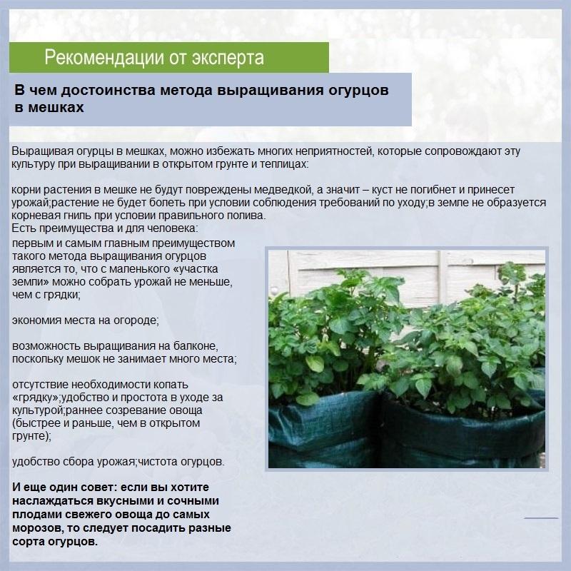О поливе капусты в открытом грунте, как часто и правильно поливать