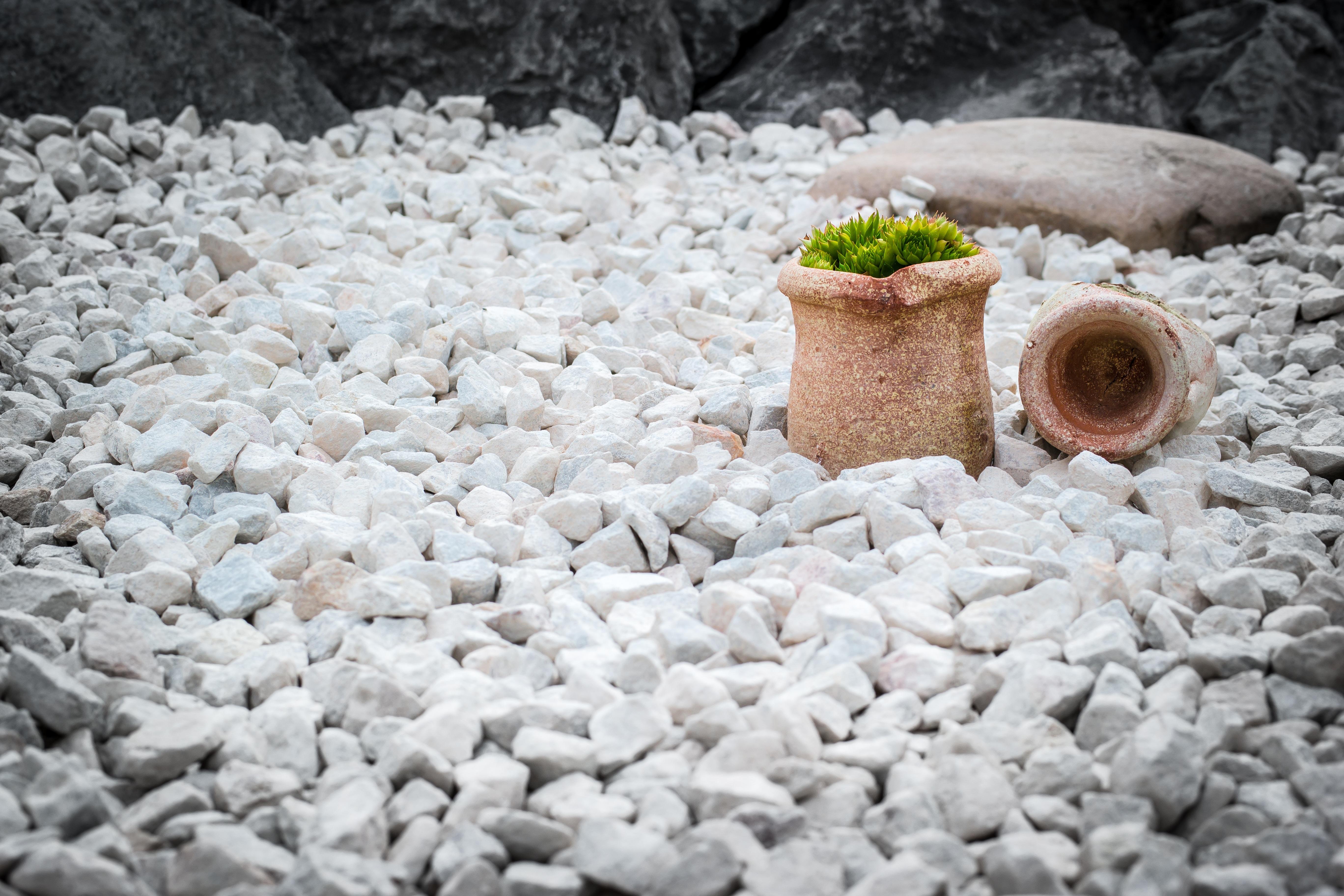 Керамзит для цветов (13 фото): чем заменить керамзит в цветочном горшке? применение керамзита для дренажа и при пересадке растений