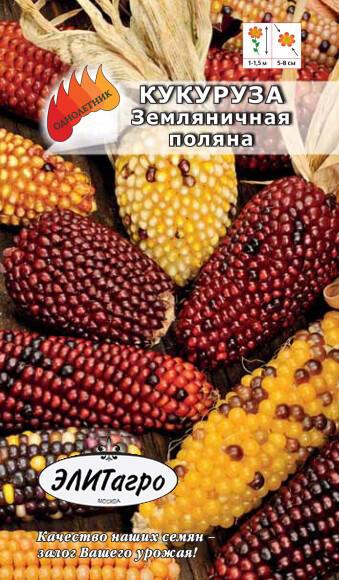 Сорта кукурузы: описание видов и советы по разведению