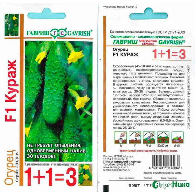 Описание и характеристики огурцов сорта Кураж, выращивание и уход