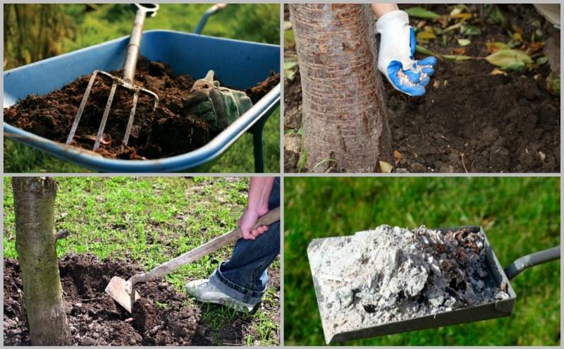 Как посадить черешню весной саженцами: сроки, правила и пошаговое руководство