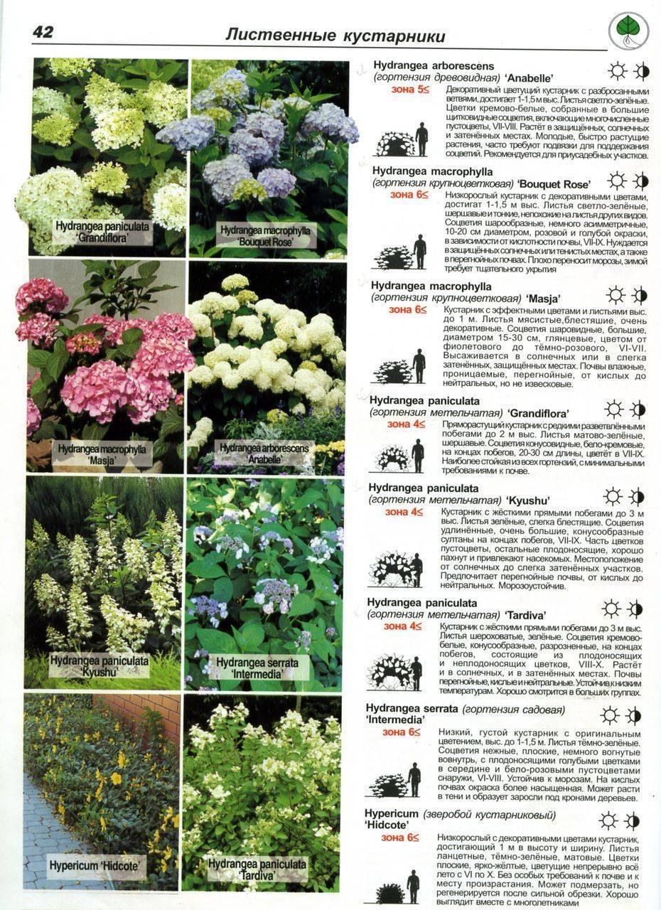 Цветущие кустарники для сада: названия, описание и фото