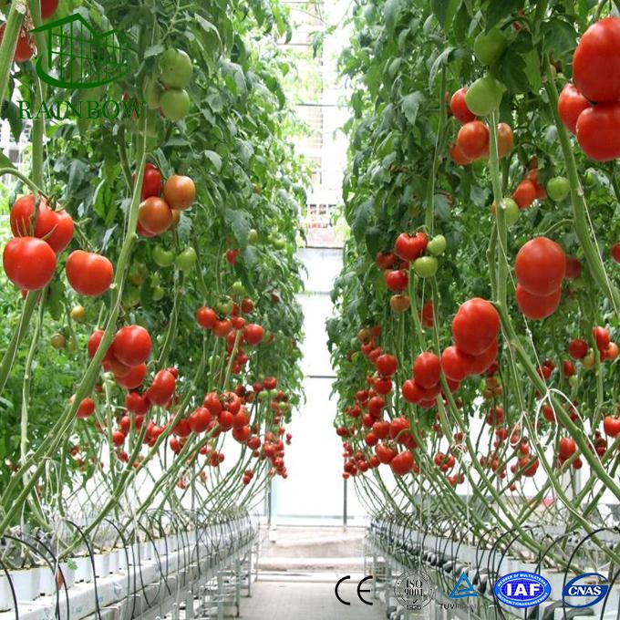 Гидропоника: изучаем нюансы выращивания томатов
