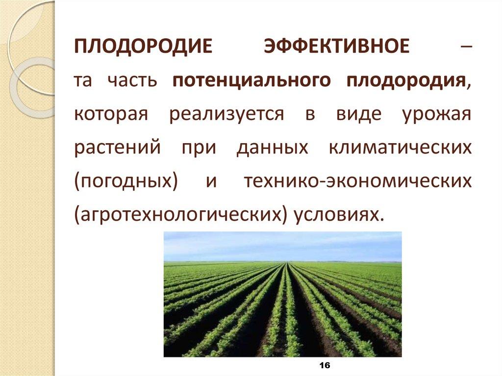 Плодородие почвы: особенности, как повысить и улучшить?