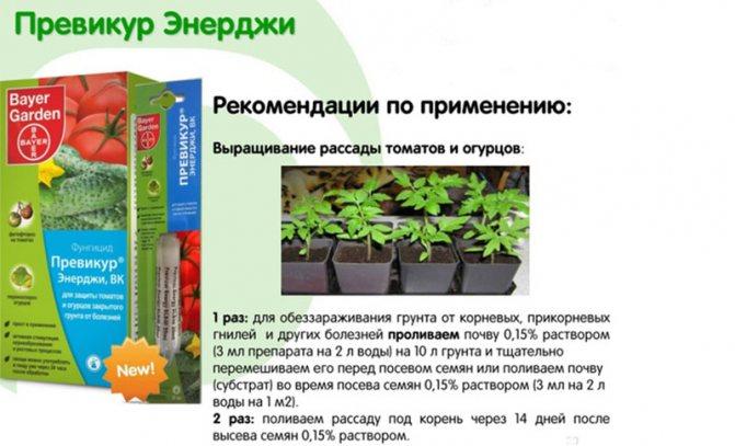 Болезни огурцов в теплице и их лечение | садоводство и огородничество
