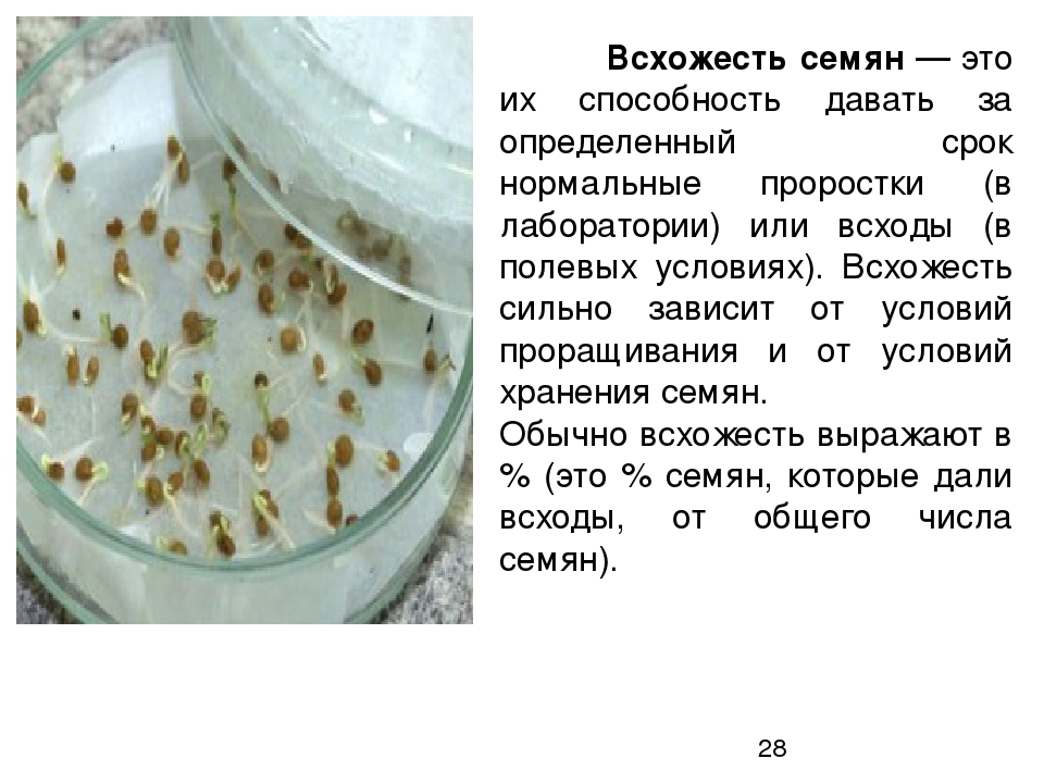 Через сколько дней всходят семена помидоров, какой у них срок годности и как проверить их всхожесть