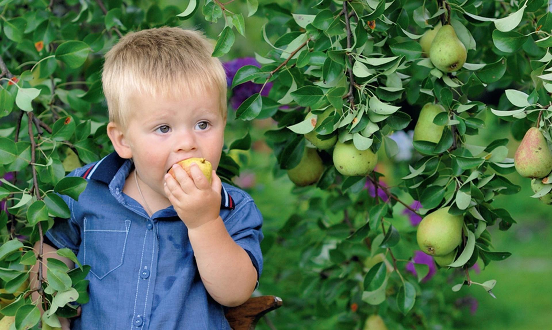 Обхитрить яблоню. как заставить дерево плодоносить? - дачный участок - медиаплатформа миртесен