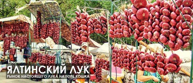 Секреты возделывания ялтинского лука: как правильно выращивать красный крымский сорт? сбор и хранения урожая