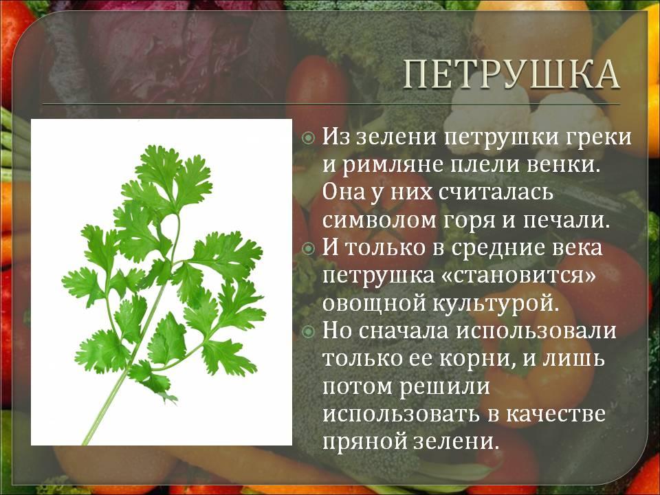 Выращивание петрушки: виды, фото, посадка и уход в открытом грунте через рассаду и посевом семян