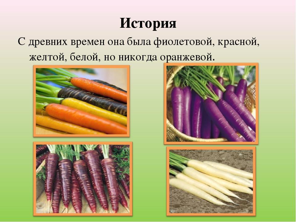 Фиолетовая морковь — характеристика сорта, фото этого овоща