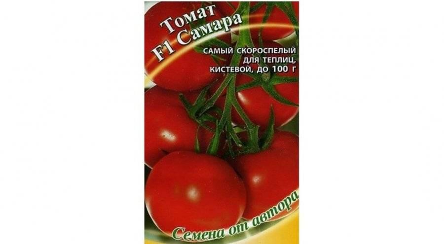 Томаты для ленинградской области описания лучших сортов - всё о землеводстве