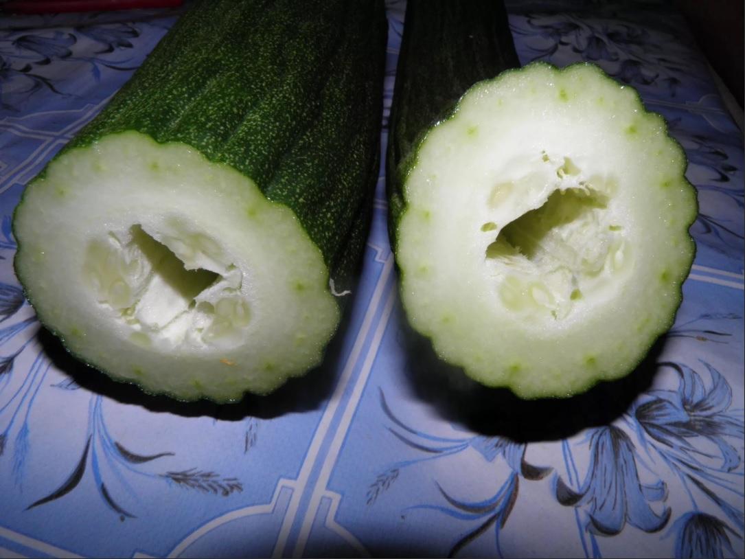 Скручиваются листья у огурцов во внутрь: почему и что делать