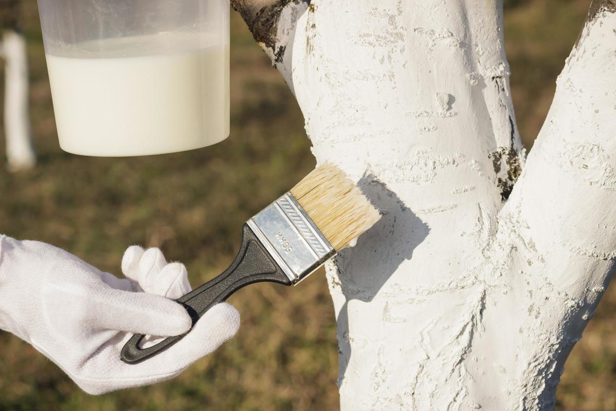 Чем побелить деревья чтобы не смывалось. популярные составы