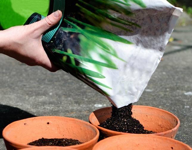 Грунт для рассады: как подготовить в домашних условиях универсальный плодородный почвогрунт