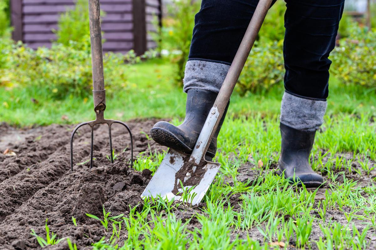 Копать или некопать? зачем копать землю осенью   good-tips.pro