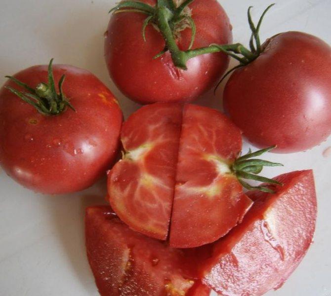 Сорт томата дикая роза