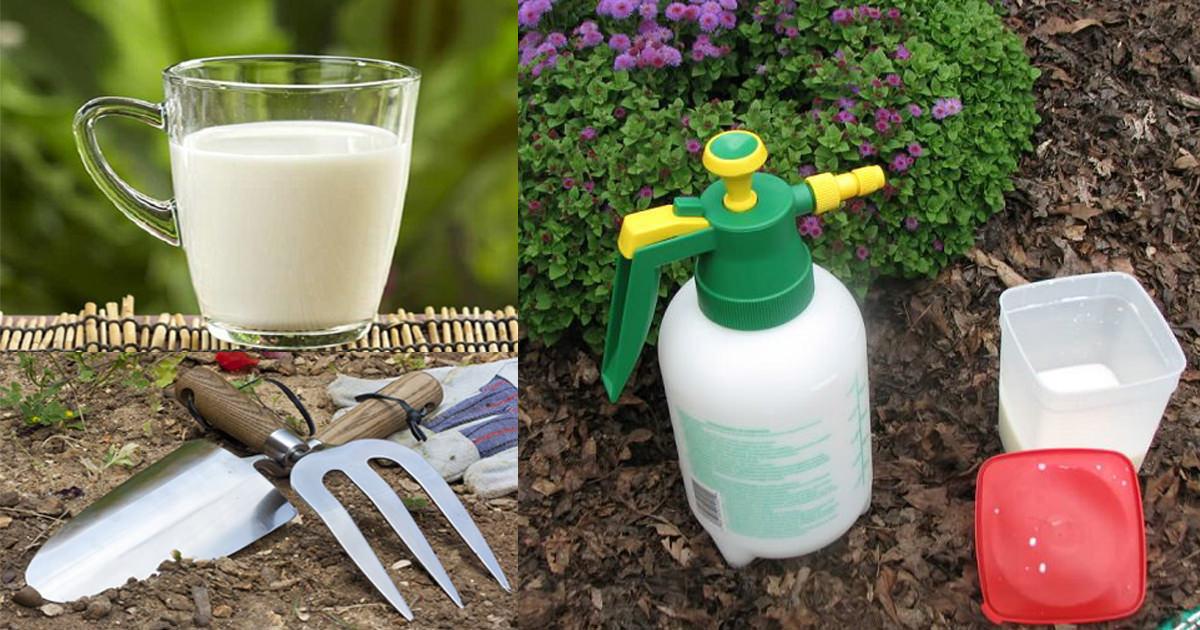 Борная кислота для огурцов: польза и вред, приготовления раствора, дозировка, опрыскивание