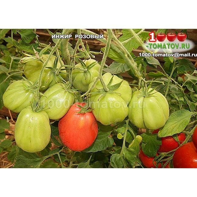 Томат инжир розовый: отзывы о сорте, палитра подвидов помидоров (красный, желтый), инструкция по выращиванию