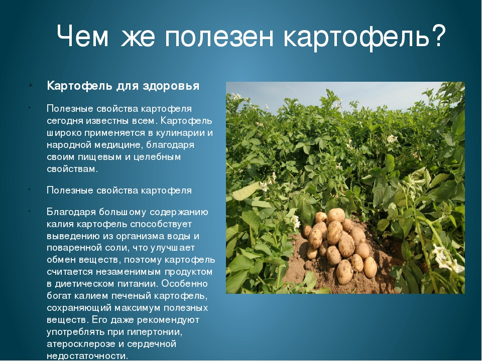 Потрясающие лечебные свойства картофеля о которых вы не знали…