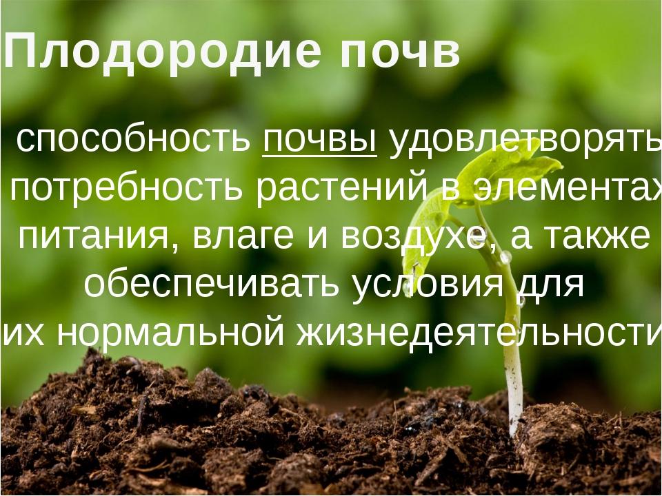 Естественное плодородие почвы – что это такое и как его повысить