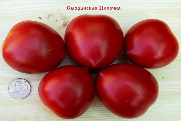 Томат сызранская пипочка: отзывы об урожайности, характеристика и описание сорта, фото помидоров