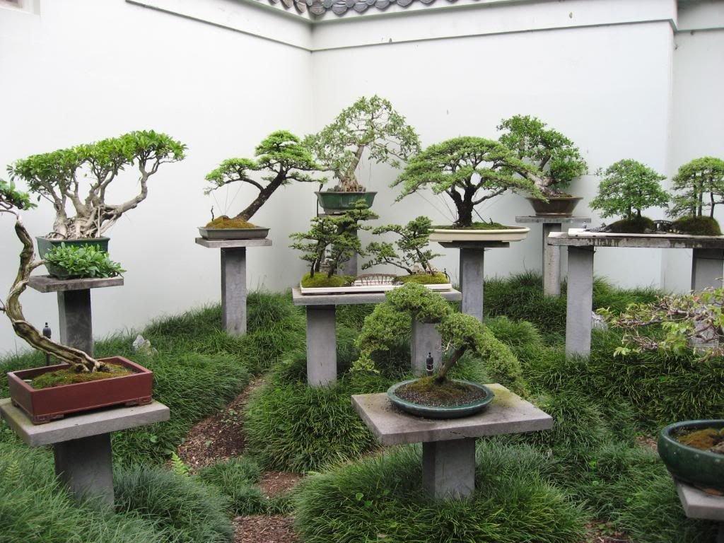 Карликовые деревья: плюсы и минусы - отзывы профессионала | сайт о саде, даче и комнатных растениях.