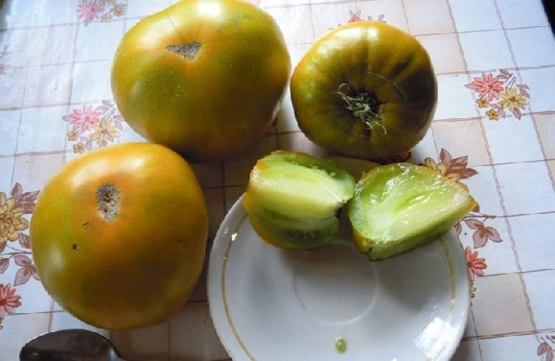 Томат малахитовая шкатулка: описание сорта, советы по выращиванию