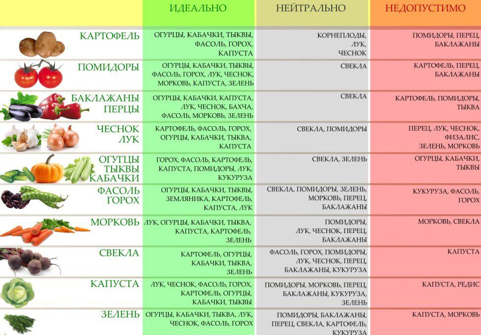 Что с чем сажать рядом: выгодное соседство овощей и растений