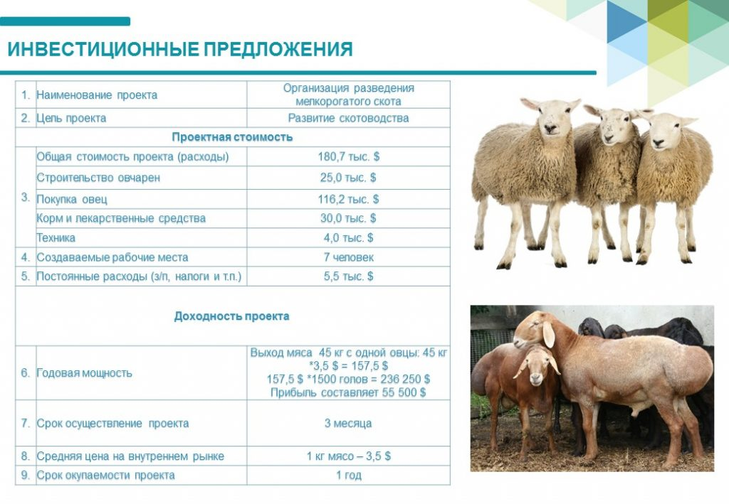 Разведение свиней по линиям: особенности и требования к данному методу | cельхозпортал