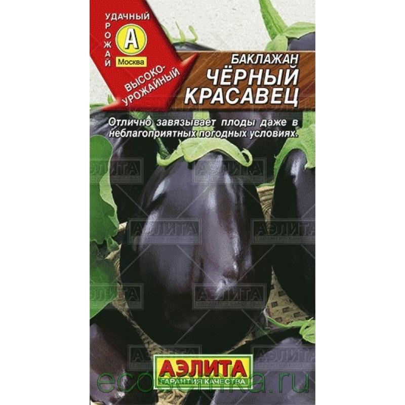 Баклажан черный красавец: топ правила выращивания, описание