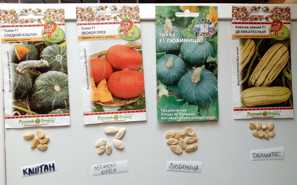 Характеристика полезной тыквы Лесной Орех, способы выращивания и правила ухода